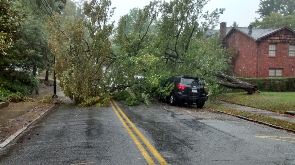 Tree down in the 100 block of  Mendenhall Street