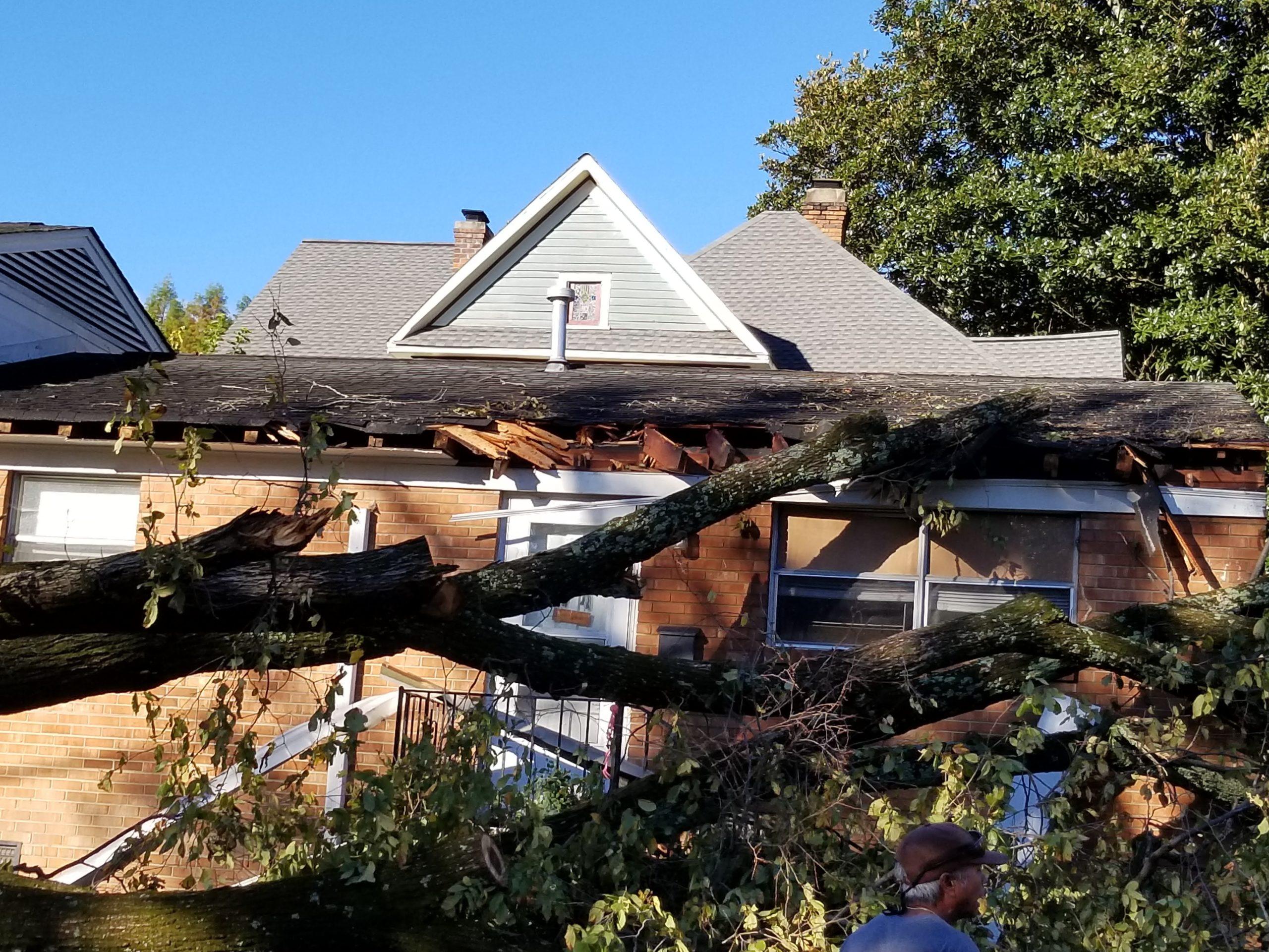 roof damaged by fallen tree
